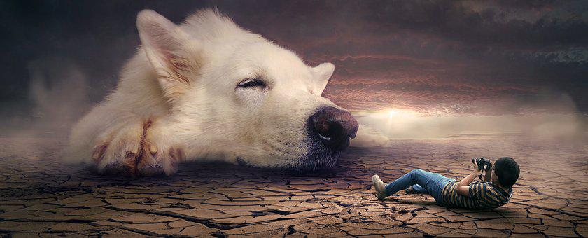 Fantasy, Dog, Man, Desert, Photograph, Photo Montage