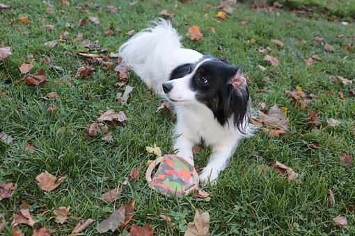 Dog, Black And White, Hybrid, White Black, Animal