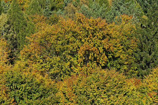 Fall Foliage, Emerge, Indian Summer, Treetop, Canopy