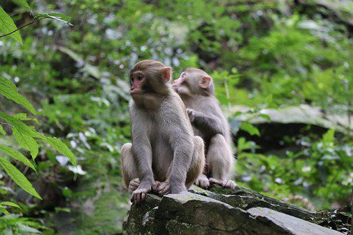 Monkey, Forest, Mother, Father, Kids, Sit Down