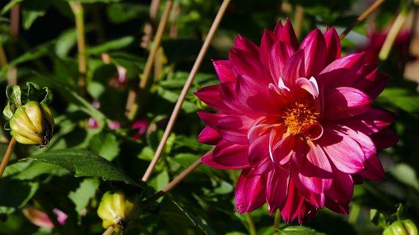 Flower, Red, Blossom, Bloom, Bud, Sun, Garden, Joy
