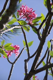 Hibiscus, Flowers, Beach, Tropical, Nature, Summer