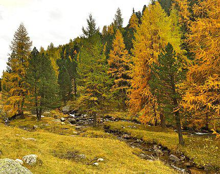 Autumn, Indian Summer, Golden Autumn, Autumn Mood, Bach