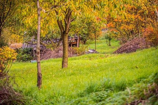 Hut, Tree, Autumn, Green, West, Heat, Yellow Leaves