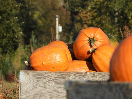 Pumpkins, Crate, Harvest, Farm, Orange, Outdoor, Fall