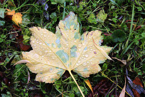 Foliage, Autumn, Drops Of Water, October