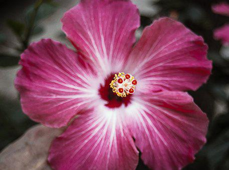 Flower, Pink, Pink Flowers, Floral, Nature, Plant