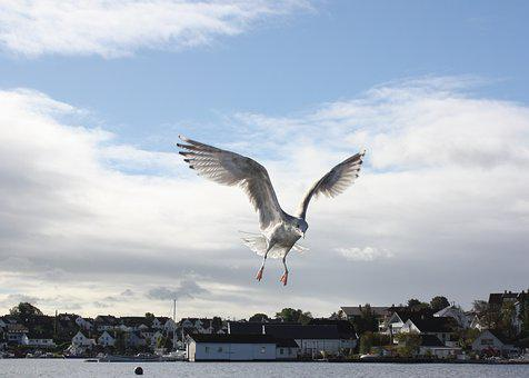 Seagull, Bird, Marine Life, Wings, The Nature Of The