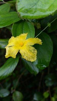 Flower, Yellow, Nature, Wild Vines