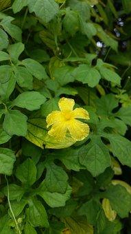 Flower, Yellow, Water Drops