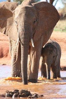 Africa, Kenya, Water, Elephants, Safari