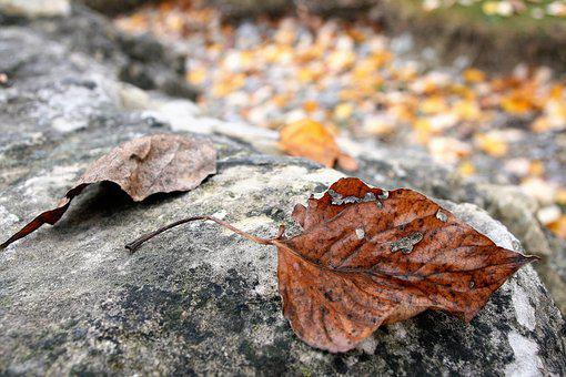 Dry Leaf, Staccato, Autumn, The Stones, October, Rock