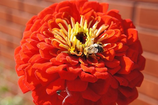 Flowers, Bumblebee, Bee, Insect, Garden Flower, Nature