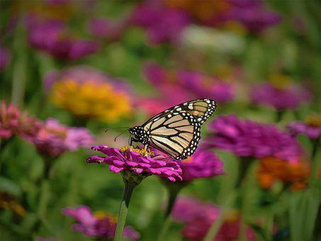 Butterfly, Colorful, Flowers, Garden