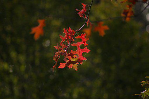 Autumn, Colorful Leaves, Colorful, Leaves