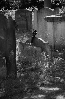 Cemetery, Magpie, Bird, Black, Creepy, Gravestone