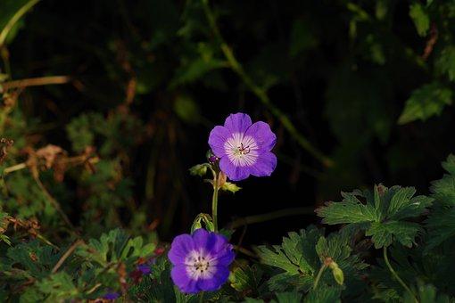 Floral, Purple Flower, Purple, Garden, Flora, Flower