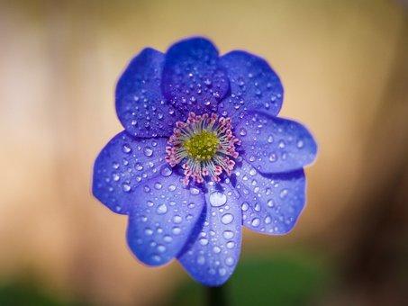 Flower, Purple, Purple Flower, Blossom, Bloom, Nature