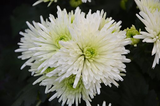 White Flowers, Bouquet, Flowers Fall, White Petals