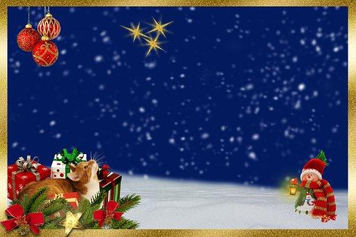 Cat, Christmas, Tannenzweig, Grinding, Star