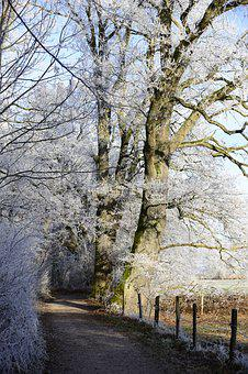 Hoarfrost, Cold, Winter, Frozen, Frost, Winter Time