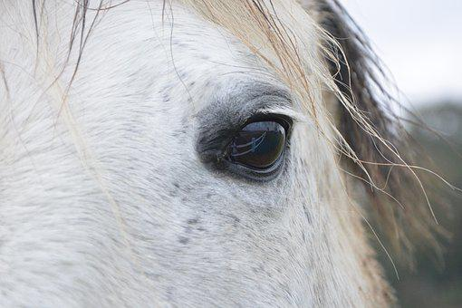 Horse, Horse Eye, Next To Horse, Horse Color White