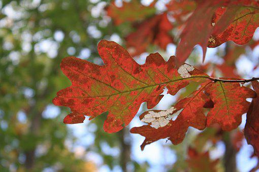 Leaves, Foliage, Leafs, Autumn, Nature, Woods, Forest