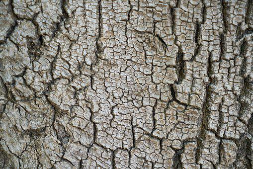 Tree, Texture, Body, Macro, Background, Shell, Nobody