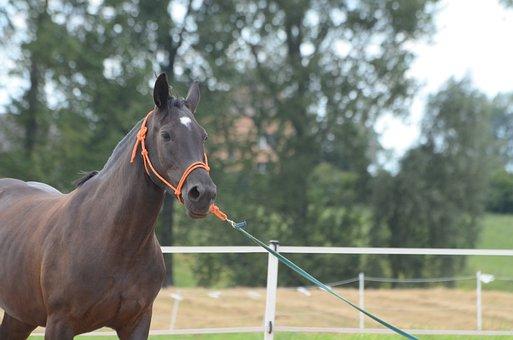 The Horse, Mare, Horse, Animal, Horses, Bay Horse, Bay