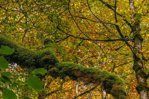 Foghorn, Wrinkle Bach, Tobel, Oberstdorf, Moss, Tree