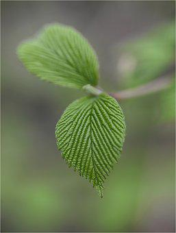 Leaf, Color, Green, Autumn, Colorful, Nature, Soledad