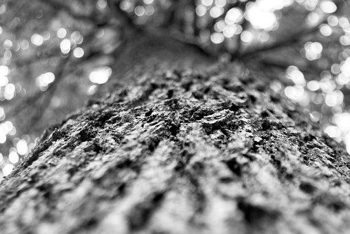 Tree, Oak, Forest, Big Tree, Nature, Wallpaper
