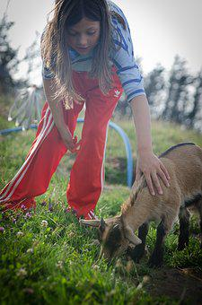 Child, Petting Zoo, Goat, Outdoor, Cute, Tame
