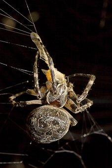 Spider, Prey, Night, Macro, Gloomy, Weird