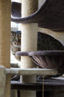 Cat, Tomcat, Domestic Cat, Kitten, Charming, Tabby
