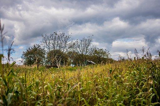 Halloween, Corn, Clouds, The Fear, Field, Tree, Hut