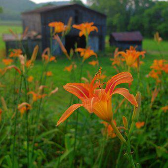 Flowers, Barn, Nature, Wood, Old, Vintage, Natural