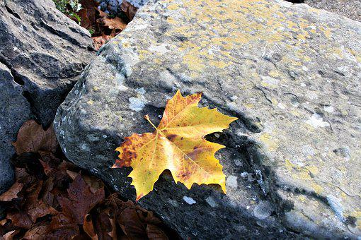 Maple Leaf, Yellow, Autumn Leaf, Autumn, Stone, Beach