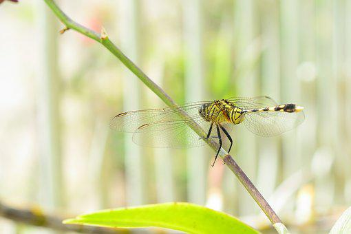 Dragonfly, Wings, Insect, Animal, Nature, Macro, Green