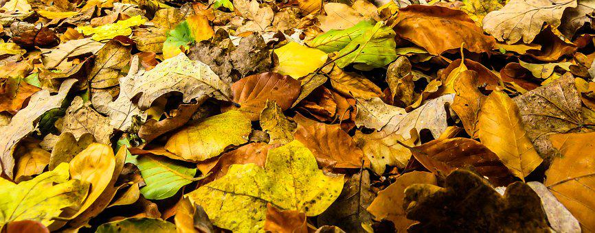 Nature, Time Of Year, Autumn, Leaves, Banner, Header