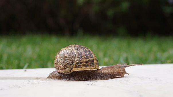 Snail, Shell, Wall, Slowly, Nature, Brown Snail
