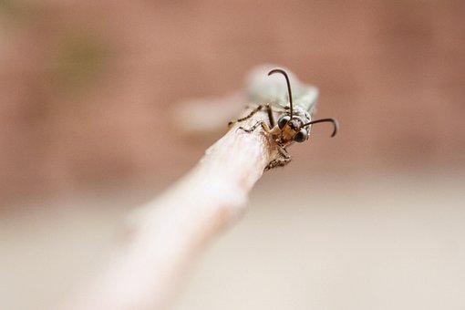 Insect, Entomology, Antlion, Ant Lion, Bug, Creepy