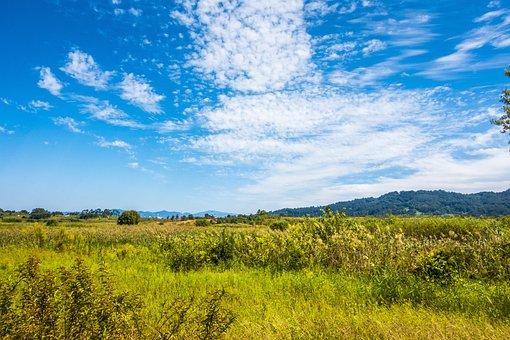Calm, Cloud, Daytime, Ecosystem, Field, Grass