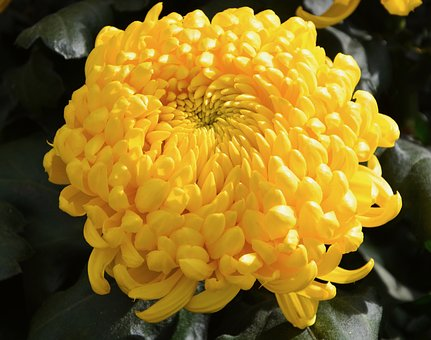 Flower, Flower Color Yellow, Nature, Garden, Plant