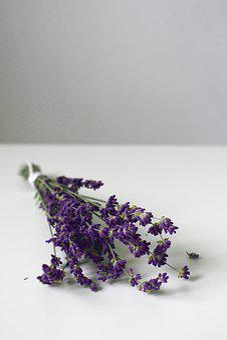 Lavender, Lavender Blossom, Flower, Purple, Nature
