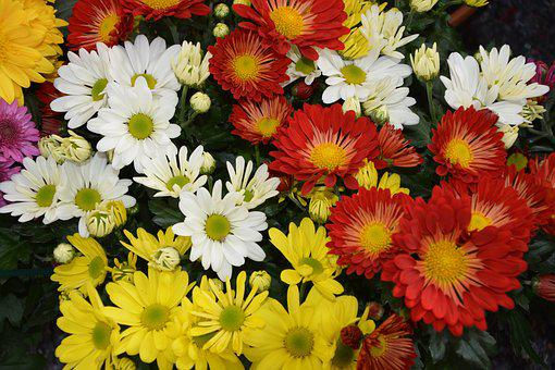 Flowers, Flowers Colors Red White Yellow, Nature