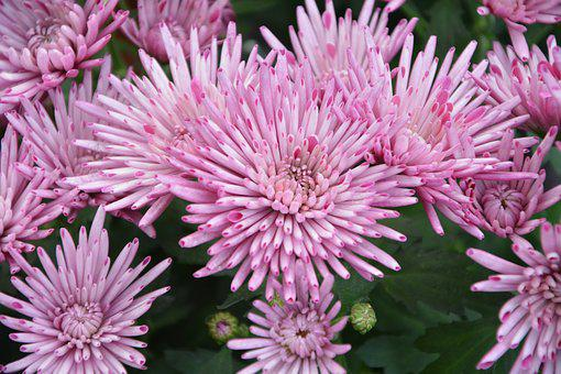 Flowers, Flowers Pink Color, Pink Flowers, Nature