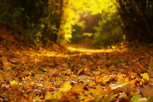 Autumn, Foliage, Nature, Path, Yellow, Color, Trees