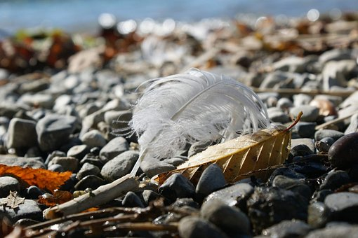 Stones, Nature, Idyllic, Pebble Beach, Coast, Lake