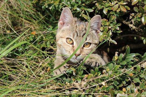 Kitten, Animal, Pussy, Cat